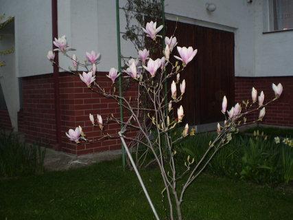 FOTKA - záhrada6