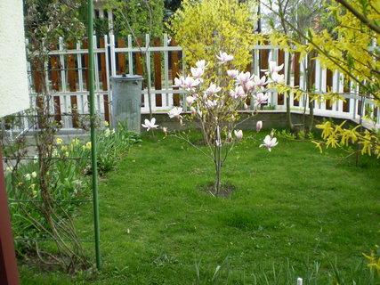 FOTKA - záhrada8