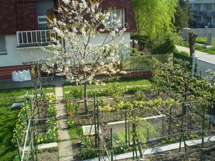 FOTKA - záhrada9
