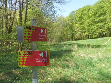 FOTKA - na rakouské straně národního parku