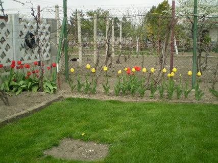 FOTKA - záhrada12