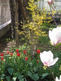 FOTKA - záhrada16