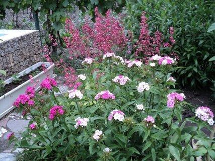 FOTKA - záhrada17
