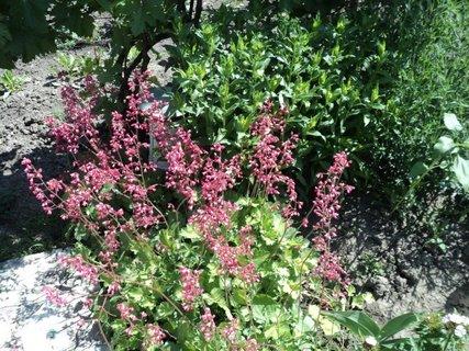 FOTKA - záhrada18