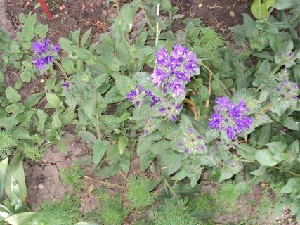FOTKA - záhrada19