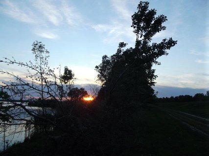 FOTKA - slniečko vykúka spoza stromov