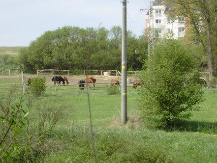 FOTKA - koně ve výběhu