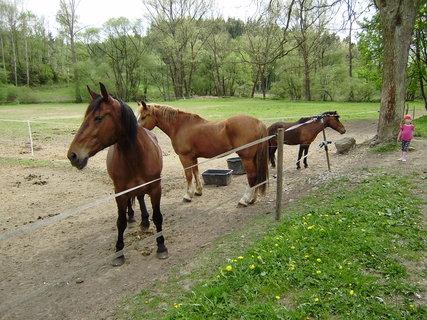FOTKA - koně ve výběhu 3