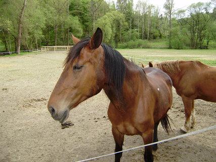 FOTKA - koně ve výběhu 4