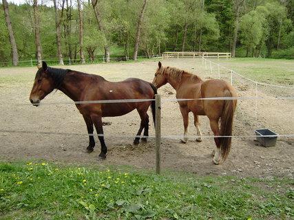 FOTKA - koně ve výběhu 5