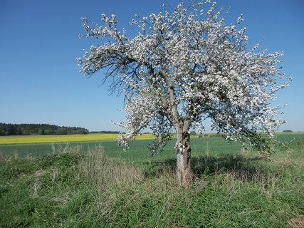 FOTKA - jaro na jižní Moravě