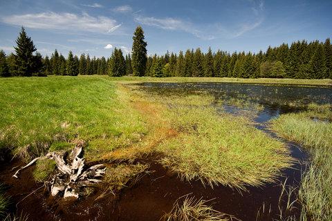 FOTKA - Mýtský rybník