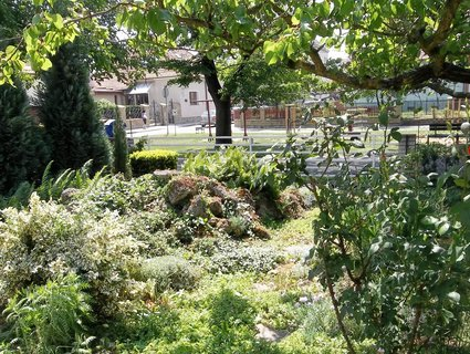 FOTKA - V naší ulici ..moje džungle