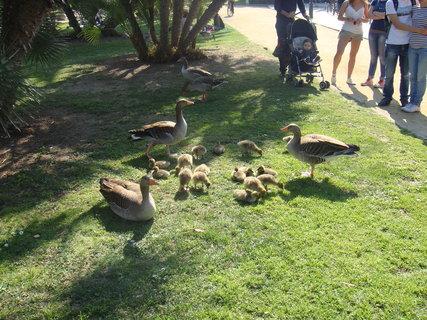 FOTKA - Rodinka v parku je středem zájmu