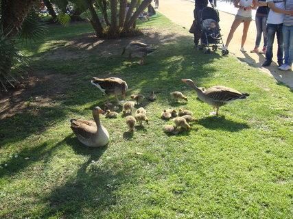 FOTKA - Rodinka v parku je středem zájmu.