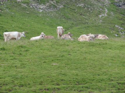 FOTKA - Alpy 1