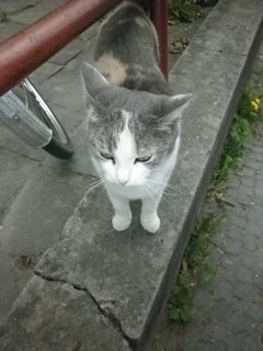FOTKA - kočka z Luhačovic