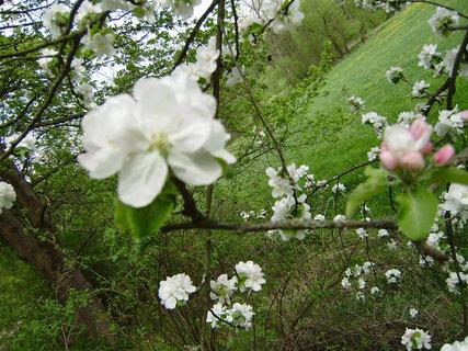 FOTKA - jarní květy 2