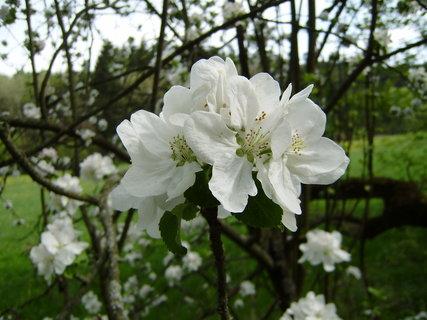 FOTKA - jarní květy 3