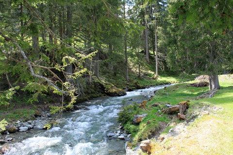 FOTKA - Baumzipfelweg, Saalbach-Hinterglemm 1