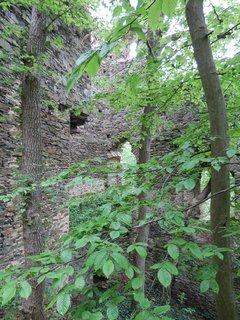 FOTKA - Nový Hrádek u Lukova - po 2. sv. válce byl v nepřístupném hraničním pásmu, takže zarostl, dnes národní park, takže kácet se nesmí...možná by to chtělo rozumný kompromis....