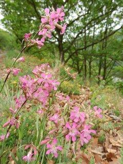 FOTKA - jarní květena v Podyjí