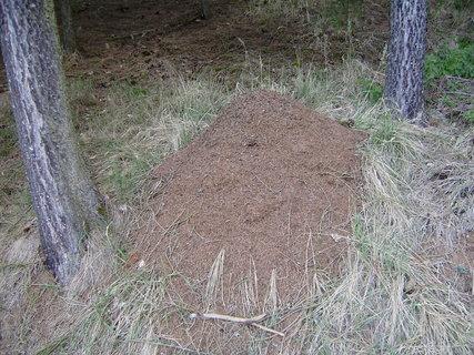 FOTKA - mraveniště
