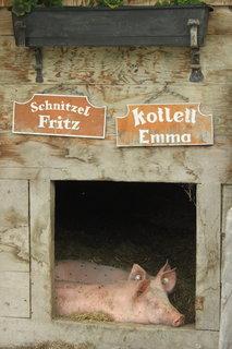 FOTKA - Baumzipfelweg, Saalbach-Hinterglemm 41