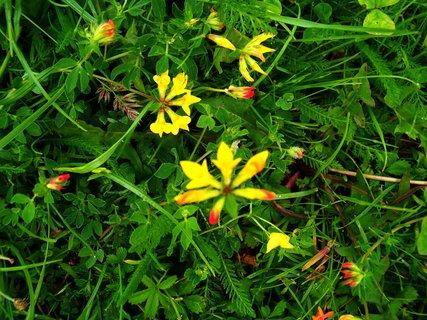 FOTKA - co vše roste v trávě...