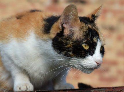 FOTKA - Dorotka bedlivě hlídá koťátka