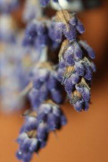 FOTKA - Sušená levandule