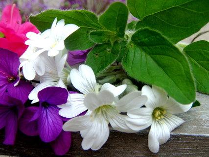FOTKA - jarní květiny