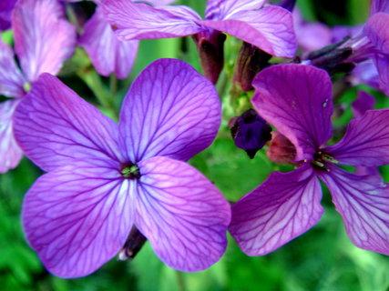 FOTKA - Makro květy