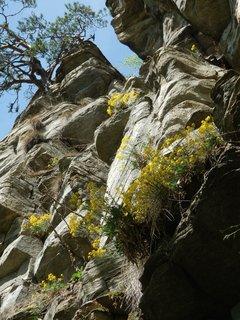 FOTKA - jaro v Podyjí