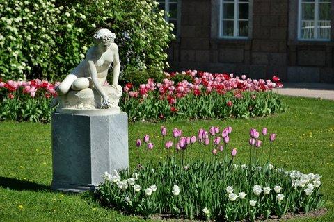 FOTKA - Akt mezi tulipány