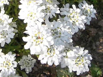 FOTKA - Bílé nízké- květen