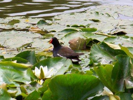 FOTKA - včerejší procházka k rybníku s bratrancem a dětmi, co máte dobrého?
