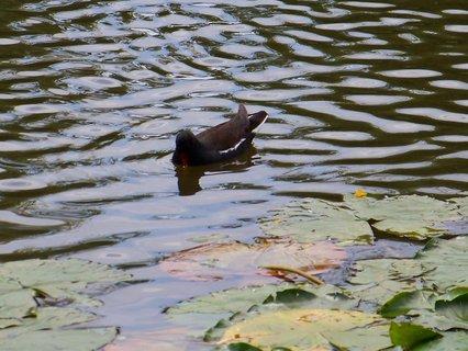 FOTKA - procházka k rybníku s bratrancem a dětmi, dobrota..