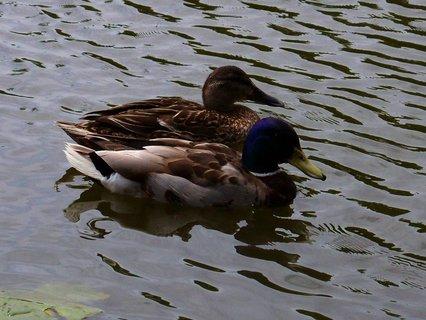 FOTKA - procházka k rybníku s bratrancem a dětmi, hezky spolu..