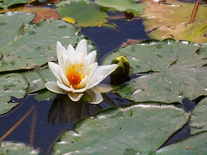 FOTKA - procházka k rybníku s bratrancem a dětmi, krásně rozvité...