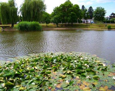 FOTKA - rybník Ohrada v Kunraticích s lekníny u břehu..