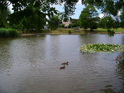 FOTKA - včerejší procházka k rybníku...