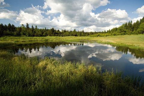 FOTKA - Malý Radní rybníček