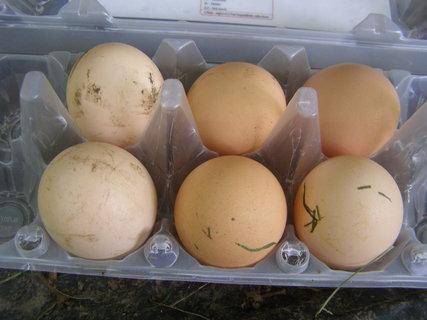 FOTKA - domácí vajíčka