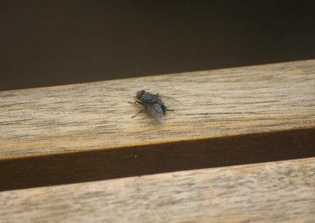 FOTKA - moucha se vyhriva na lavicce