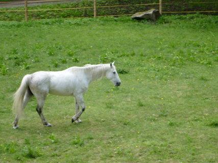FOTKA - kůň ve výběhu vedle hotelu 4