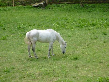 FOTKA - kůň ve výběhu vedle hotelu 5