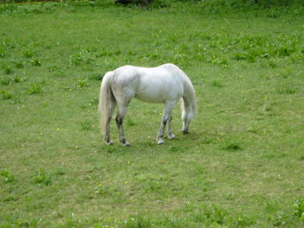 FOTKA - kůň ve výběhu vedle hotelu 6
