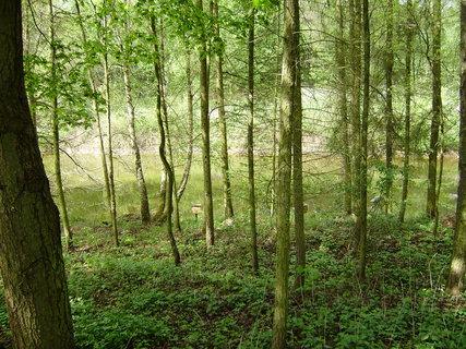 FOTKA - v lese u rybníčku 3