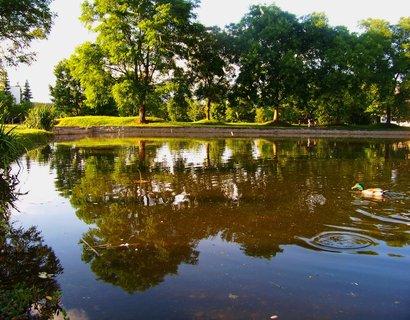 FOTKA - 17.6.2012, rybník s kačerem..